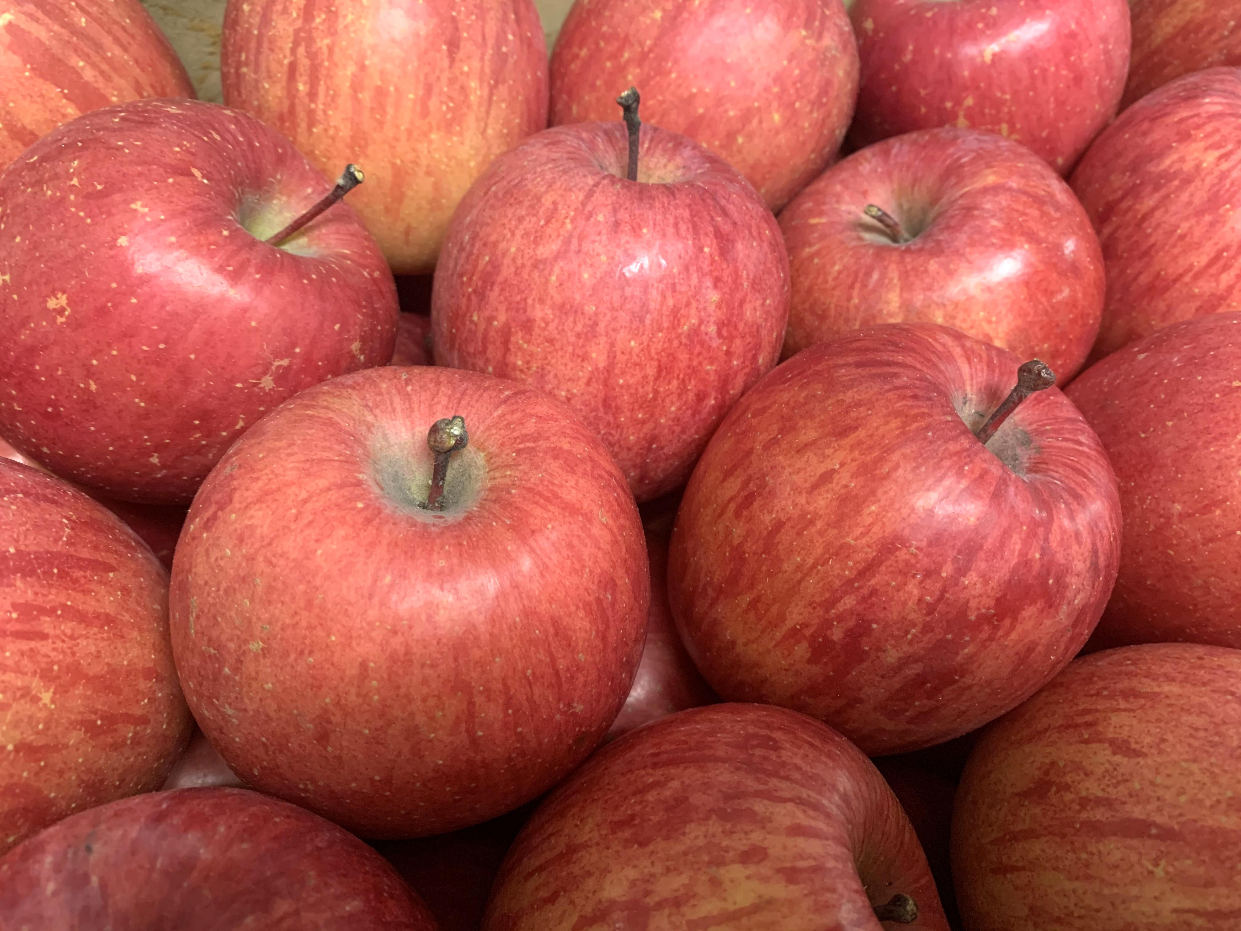 秋元さんのサンふじりんご